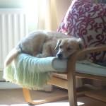 Durham Pet Sitting