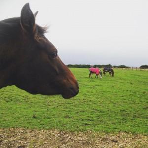 Horses - Durham Pet Care
