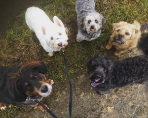 Friendly Doggos - Durham Dog Walker