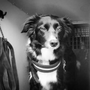 Barkyboo - Durham Dog Walker - Little Brown Doggie