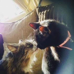 Kissing Cats - Durham Pet Care