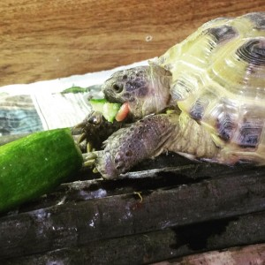 Tortoises & Reptiles - Durham Pet Care