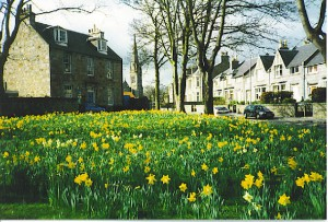 spring_in_ferryhill-_-_geograph-org-uk_-_111850