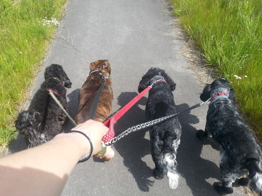 Dog Walking in South Durham