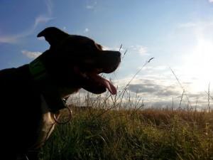 Bonnie - Durham Pet Care
