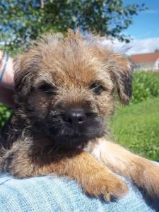 Puppy Dog Barney - Durham Pet Care