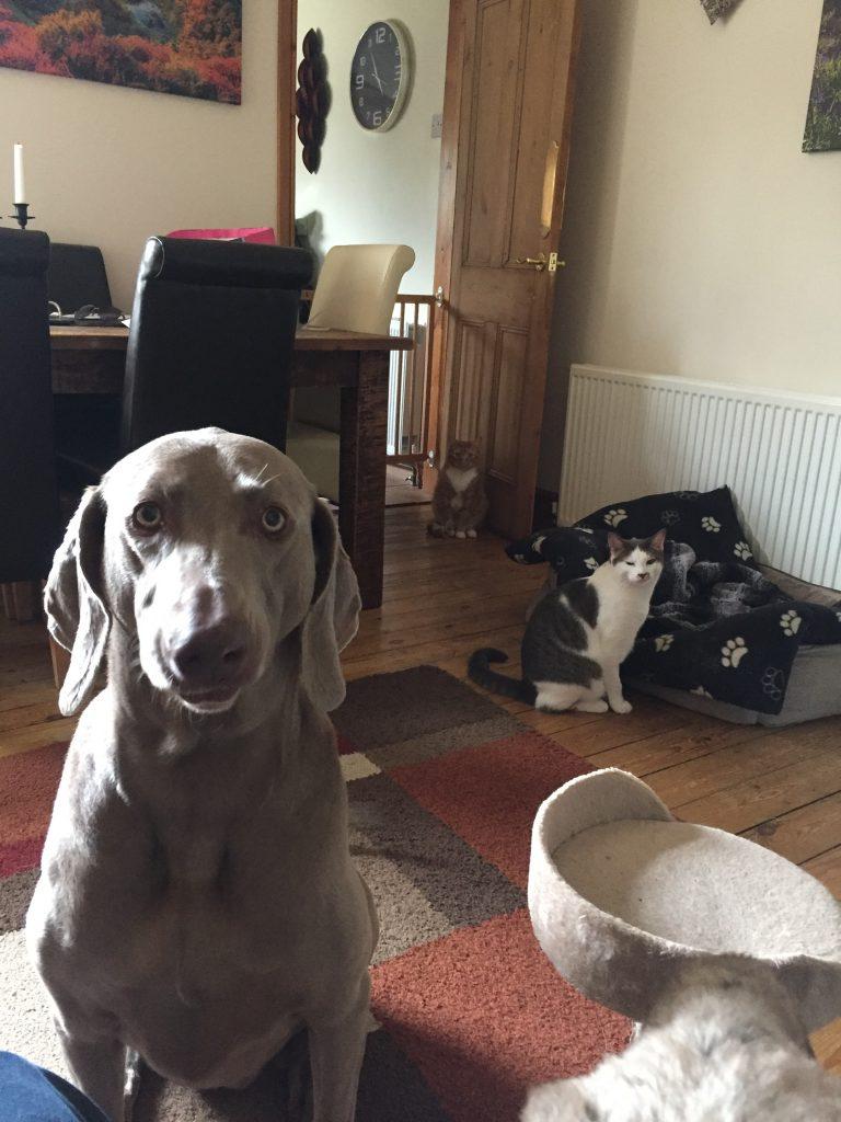 Durham Pet Sitting - Overnight Stay
