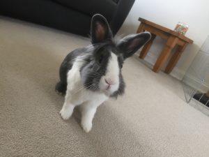 Overnight Pet Sitting - County Durham